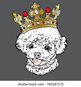 Lovely poodle in the crown. Vector illustration. Fashion & Style. A pedigreed puppy and a jewel. Beautiful dog.