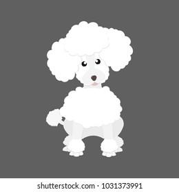 lovely white poodle dog sitting on gray background vector design illustration