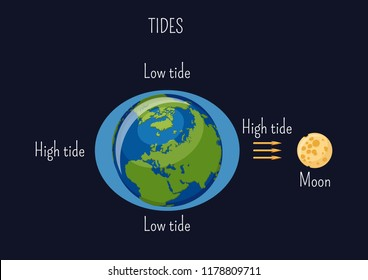 Low and high lunar tides diagram. Effect of Moon gravitational force on seacoast water level. Astronomy, geography science for kids. Cartoon style vector illustration.