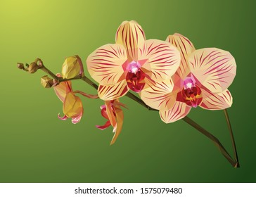 Low poly flower vector of orchids in high details illustration. With yellow-green gradient color background. EPS 10. Ideal for posters or t-shirts.
