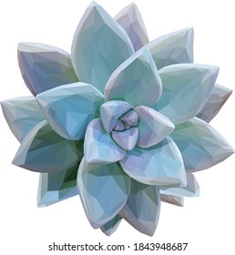 Low poly, geometrical, illustration of a teal succulent