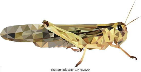 low poly locust, Polinomial locust, locust from triangles, Vector graphics,  locust illustration with black background
