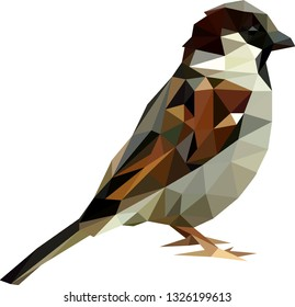 Low poly sparrow, Polinomial male sparrow, Sparrow from triangles