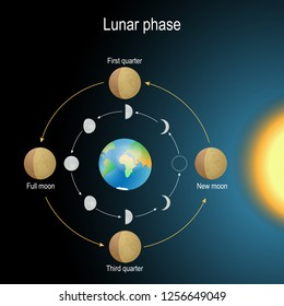 lunar phase. phases of the Moon depends on the Moon's position in orbit around the Earth and the Earth's position in orbit around the sun. Vector illustration for science, and educational use