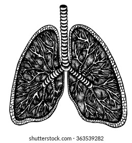 Lungs. Hand drawn vector illustration.