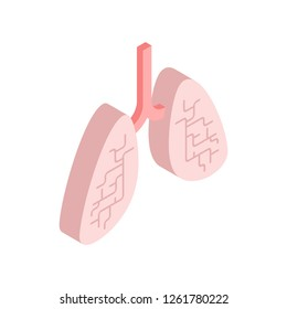 Lungs isometric isolated. Internal organ 3D. anatomy of human body. Organs systems body