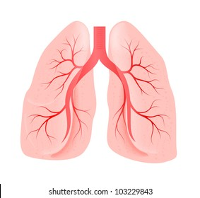 lungs of the person