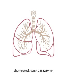 Lungs. Respiratory system hand drawn vector illustration. Lungs vintage style sketch drawing. Part of set.
