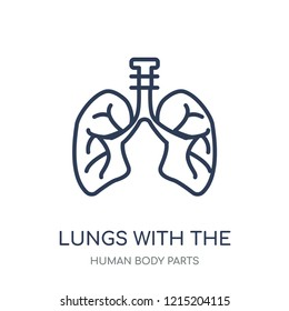 Lungs with the trachea icon. Lungs with the trachea linear symbol design from Human Body Parts collection.