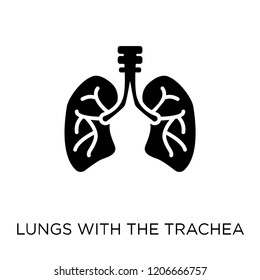Lungs with the trachea icon. Lungs with the trachea symbol design from Human Body Parts collection.