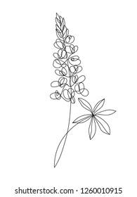 Lupine flower one line drawing. Minimalist art.