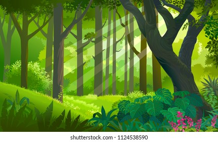 Lush dense green forest with sun rays touching the plants and trees