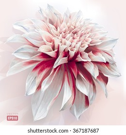 Luxurious red-white garden Dahlia flower painted in watercolor style