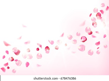 Luxury fresh rose petals is falling in the air on white romantic vector card. Wedding celebration design. Stylish fashion pink backdrop. Saint Valentines template. All elements are isolated