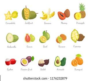 Lychee and carambola set with names and tropical fruits vector. Pineapple and cupuacu, bael and mamey salak and avocado, kumquat and kiwano ambarella