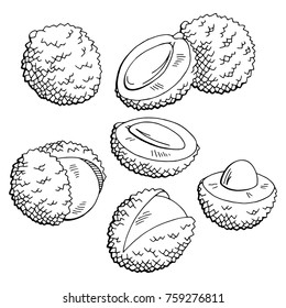 Lychee fruit graphic black white isolated sketch illustration vector