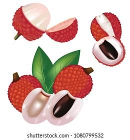 Lychee Fruit Vector