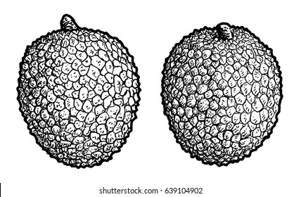 Lychee illustration, drawing, engraving, ink, line art, vector
