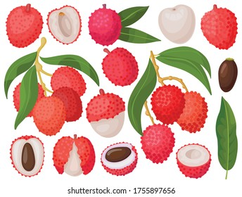 Lychee vector cartoon set icon. Vector illustration litchi on white background. Isolated cartoon set icon lychee.