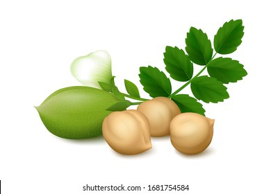 Lying three dried Chickpea beans, fresh green pod, flower and leaves on white background.