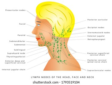 Lymphatic drainage. Lymph nodes of the head, face and neck. Retropharyngeal lymph nodes. Medical illustration depicting the lymphatic system in the head, face and neck