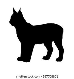 Lynx silhouette. Hand drawn image. Black white vector illustration.