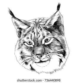 lynx sketch head vector graphics in black-and-white monochrome pattern
