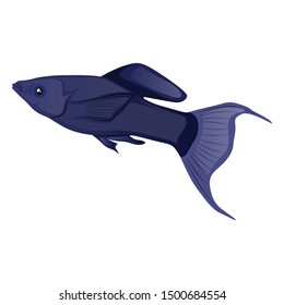 Lyretail Molly Fish Vector Illustration Isolated On White Background
