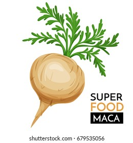 Maca vector icon. Healthy detox natural product superfood illustration for design market menu superfood .