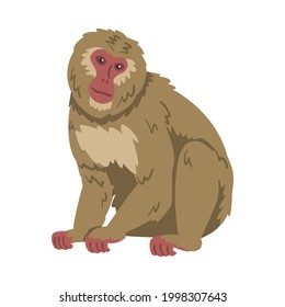 Macaque Monkey as Herbivorous Ape in Sitting Pose Vector Illustration