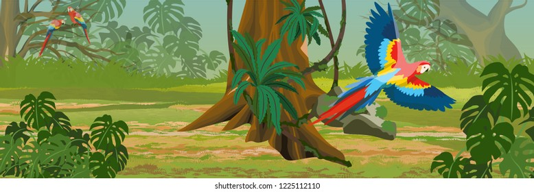 Macaw parrot flies through the jungle. A tropical forest. Rainforests of Amazonia. Tree, epiphytes, creepers, banana trees, flowers and monsteras. Realistic Vector Landscape