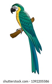 Macaw parrot mixed blue and yellow in vector illustration