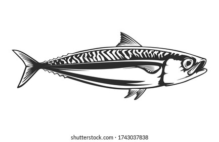 Mackerel fishing logo. Mackerel fish restaurant menu emblem. Fishing theme illustration. Isolated on white.
