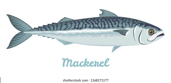 Mackerel isolated on white background. Vector illustration of fresh fish in a simple flat style.