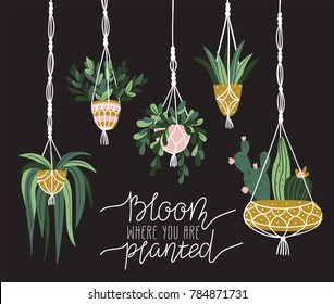 Macrame plant hangers in scandinavian interior. Vector stylish elements design. Card with lettering - 'Bloom where is you are planted'