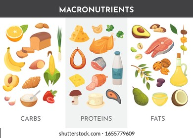 Macronutrients vector illustration. Main food groups : proteins, fats and carbohydrates. Dieting, healthy eating concept.