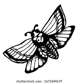magic moth vector. vector black and white drawing, tattoo style