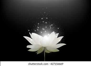 Magic White Lotus flower on black background.Vector