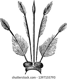 Magnified Head of Gnat with its two eyes vintage line drawing or engraving illustration.
