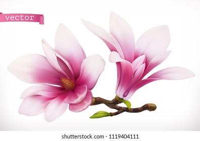 Magnolia. 3d realistic vector icon