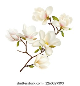 Magnolia. Beautiful. Gentle. Spring Flower. Wedding card Happy Mother's Day. Greeting card. holiday background. Trendy Design Template. Vector illustration. Springtime.