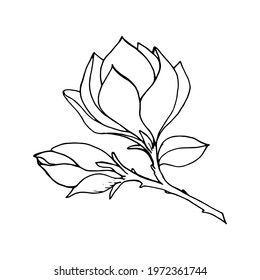 Magnolia branch with bud and leaf, black outline drawing with white fill. Vector illustration for festive design, announcements, postcards, invitations, posters.