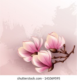 Magnolia branch isolated