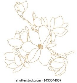 Magnolia flower drawing and sketch with black and white line-art.Magnolia flower drawing and sketch with black and white line-art.