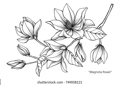 Magnolia flower drawing sketch black white stock vector royalty magnolia flower drawing and sketch with black and white line art on white mightylinksfo