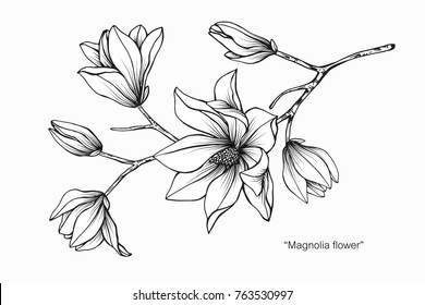 Wild rose flowers drawing sketch lineart stock vector 645012832 magnolia flower drawing and sketch with black and white line art thecheapjerseys Choice Image