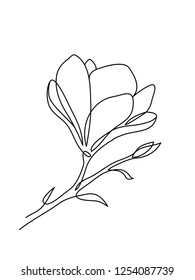 Magnolia flower. One line drawing. Minimalist art