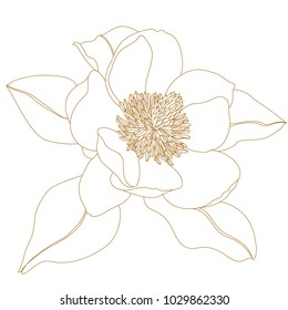Magnolia flower, top view, isolated on white.Graphical hand drawn magnolia flowers. Vector.Magnolia flower drawing and sketch with black and white line-art.