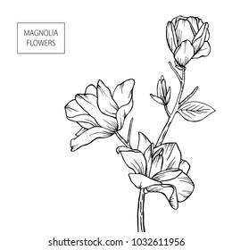 Magnolia flowers hand drawn, black isolated on white background. Vector illustration. Eps10