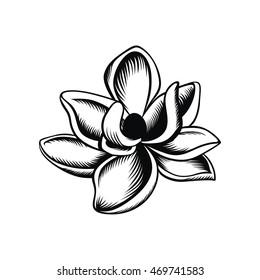 Magnolische Vektorgrafik